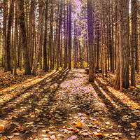 Light in the Forest Photograph by Jim Sauchyn - Light in the Forest Fine Art Prints and Posters for Sale