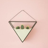 Geometric wall terrarium including terrarium kit