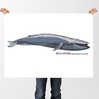 Blue Whale Print, Printable Art Download, Anatomical Educational Poster, Science Animal Print, Nursery Decor, Childrens Art, Marine Life
