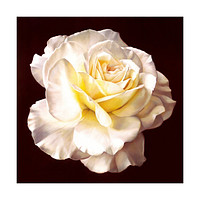 Pavilion of regimen wall painting decoration painting beauty salon hang painting flower without frame canvas for painting wall painting rose oil painting   03