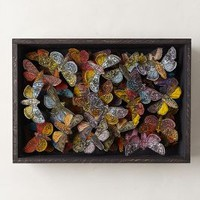 Moth Collection Shadow Box by Anthropologie Assorted One Size Decor