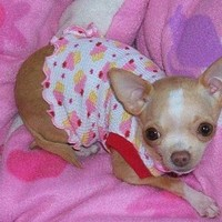 Pet Clothing Tank Dress Sweet and Yummy Cupcakes Chihuahua All Done and Ready to Ship