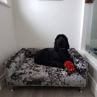 Extra Large Dog Bed with Memory Foam, Studs and Chrome Legs, Luxurious Crushed Velvet Pet Bed, Bespoke Handmade Dog Soffa