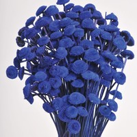 """Blue Dried Floral Buttons Bundle - 18"""" Tall"""
