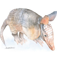 Armadillo Watercolor Painting - 11 x 14 - Giclee Print Armadillo Art Texas Animal