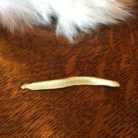 Fox Baculum Bone