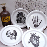 4 Anatomical Dishes Plates Skull Skeleton Hand Rib Cage Heart Halloween Bones Chase and Scout