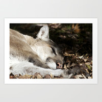 Resting Cougar Art Print by Veronica Ventress