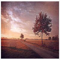Epic Art 104101 Song of the October Bird by Monika Strigel: 32 x 22 Giclee Canvas