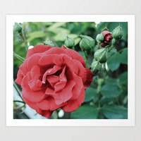 Rose Art Print by Liveart4evr