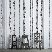Super Real Birch Trees Wall Decals - 9 ft tall (Quantity of 5)