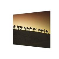 A group of camel herders with their camels