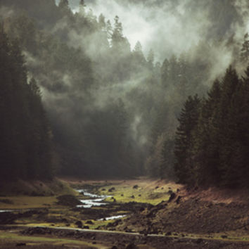 Foggy Forest Creek Art Print by Kevin Russ