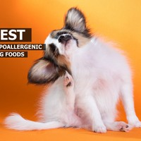 Best Hypoallergenic Dog Foods – Top 5 Choices | MySweetPuppy.net