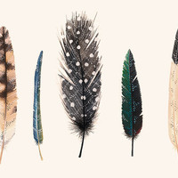 Feathers 2 11x17 Print by anavicky on Etsy