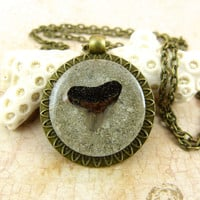 Fossil Shark Tooth Pendant Necklace with Sand and Shell from Sanibel Florida