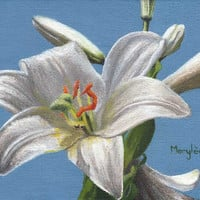 Original oil painting on canvas, White lily flower on a blue background (unframed) - by Savousepate
