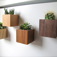 """Oh My Ombre, Set of 4 Cube Planters (3""""), Magnetic, Wall, or Desktop, in sustainable Birch, VG Fir, Teak, Walnut, air plants sold separately"""