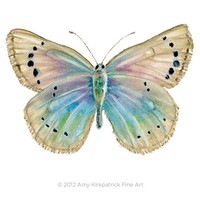 No. 25 Alexis Butterfly, 8x10 Signed Fine Art Print of Amy Kirkpatrick watercolor