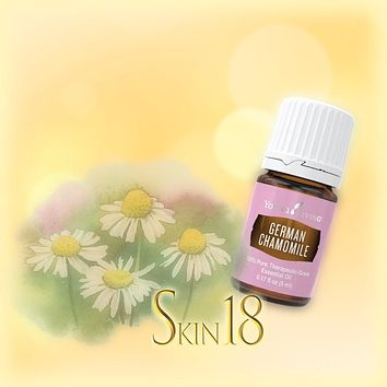 German Chamomile Essential Oil Single