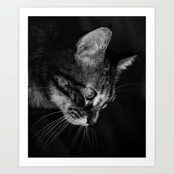 kitten in black and white by VanessaGF
