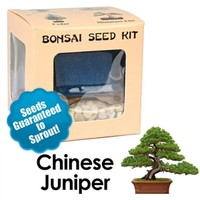 Chinese Juniper Bonsai Seed Kit | Eve's Garden Gifts