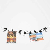 Cat Walk Photo Clip - Set Of 8- Assorted One