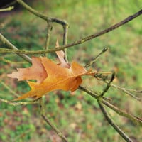 Autumn Leaves Falling - Nature 6x4 7x5 8x6 Photo Print