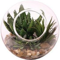 Small Succulent Bubble Waterlike