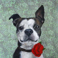 Cute, Cheerful, Black and White Boston Terrier with Red Poppy, Rose, on Aqua Green Background  - original oil painting by Clair Hartmann
