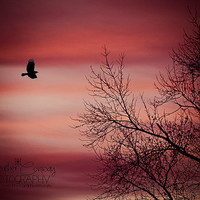 Red Fine Art Nature Photography, 16x20 large wall art, for a childs room, Pink Sky, Winter Sky, white Black, Nursery Decor