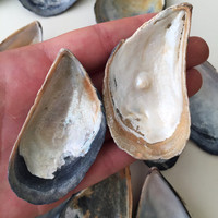 15 Mussel Shells/ Mytilus Shell Set/ Mussel Shell Pieces/ Natural Seashells/ Crafting Mussel Shell/ Wedding Decorations/ Craft Supplies