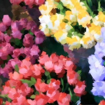 Photograph of Colourful Tulips in Amsterdam.  Impressionistic image, Abstract, Nature.