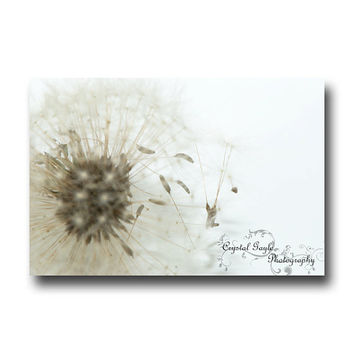 Dandelion Seeds Macro Photography Nature Floral White Brown Home Decor Print Magnetic Calendar Coaster Set Greeting Card
