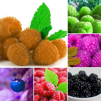 1000pcs/bag SEEDS Genuine Wild Raspberry Seeds for garden - bonsai fruit  plant seeds