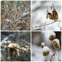 Winter Photography Collection - Nature Photography - Neutral Colors - Snow Photography - Midwest Photography