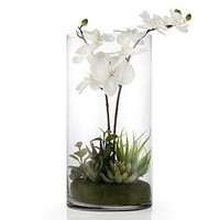 Orchid With Succulents In Vase | Potted Plants & Trees | Botanicals & Plants | Accessories | Decor | Z Gallerie