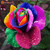 Rose Seeds Flower Colorful Rose Seeds   - 100 pcs seeds