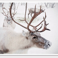 Winter Reindeer Photo-Christmas in Norway Snow-Wall Art-Fine art Photography-8x10