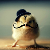 Chick in A Hat And Mustache Refrigerator Magnet
