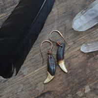 Coyote tooth earrings, coyote teeth earrings, vulture culture, vulture culture jewelry, vulture culture earrings, basic coyote tooth earring