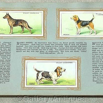 Dogs - Vintage Full Set of 50 Cigarette Cards in Original Album by W. D. & H. O. Wills Issued in 1937 (ref: 3190)