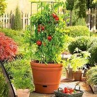 Self-Watering Tomato Gardening System - Plow & Hearth