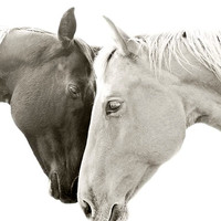 Sweet Photograph, Romantic Horse photo, TOGETHER, Size 8x10, animal art, equestrian photography