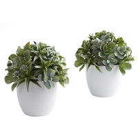 "8"" Mixed Succulent Semi-Ball Topiary w/Round White Container"