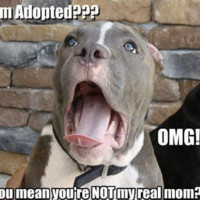 I'm Adopted!? magnet