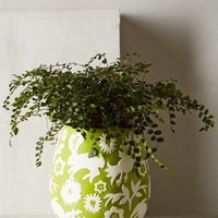 Concha Garden Planter by Anthropologie