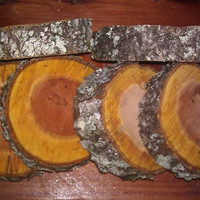 """FIVE (5)  Cherry tree wood slices 1"""" thick rustic weddings bridal favors coaster chargers"""