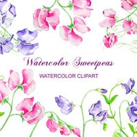 Watercolor flower sweet pea purple pink digital clipart instant download