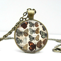 Butterfly Necklace: Kinds of Butterflies